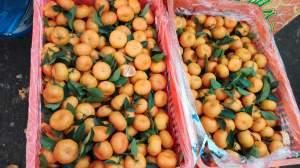 东莞市长征果品贸易有限公司专业代销柑橘
