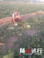 会宁郭城赵有笔7月新绿宝西瓜