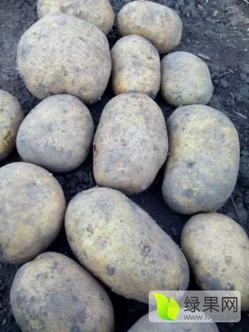 黑龙江土豆,荷兰系列,尤金885,等等。