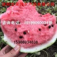 江苏沭阳瓜种植基地大量供应8424水甜◐绿色无公害
