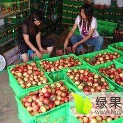 陕西大荔县中油12油桃现已大量成熟