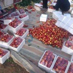 大荔中油5号油桃种植面积达万亩以上