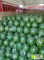 开封西瓜代办产区,种植面积大