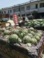 河南夏邑是全国有名的瓜果蔬菜之乡