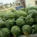 亲爱的瓜友们你们好,我们地区有大量西瓜