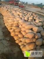 嘉鱼6月中旬至9月下旬大量供应早熟蜜本南瓜