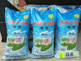 济南大青棵蒜种