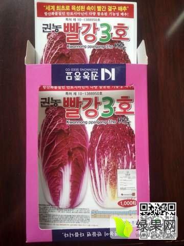 莱阳紫白菜种子批发 杂交一代紫白菜品种