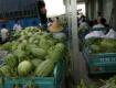 安徽淮北家乡万亩麦茶点⌒ 种西瓜7月重磅上市