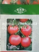 寿光番茄种子荷兰引进,无限生长型早熟品种