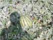 黑龙江省绥化市红旗乡西瓜种植基地