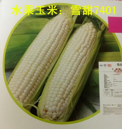 甜玉米价格