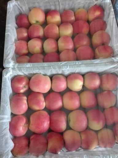 东莞下桥水果批发市场嘎啦苹果