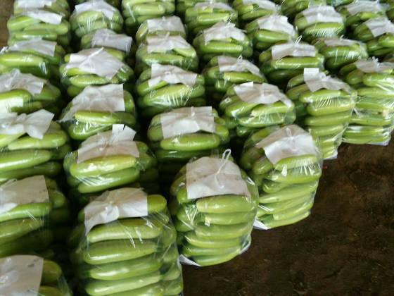 昌黎葫芦大量上市中 八两至一斤半