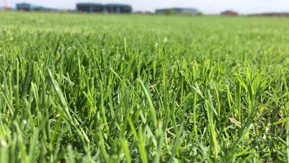 江苏上千亩草坪基地,交通便利,