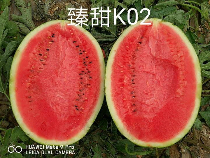 臻甜k02甜王西瓜种子