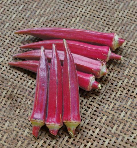 日本进口红秋葵种子,紫红色的红秋葵种子