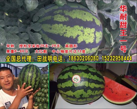 清苑传奇久红 华耐甜西瓜种子常年供应