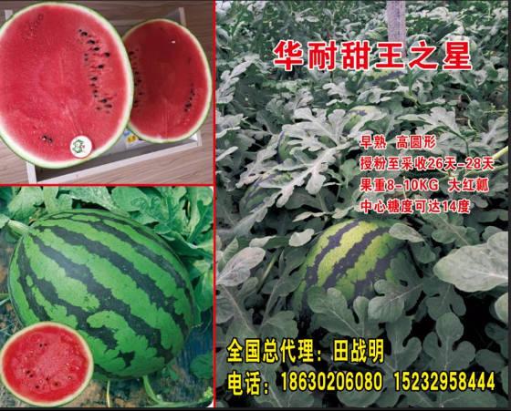 河北清苑华耐甜王传奇久西瓜种子