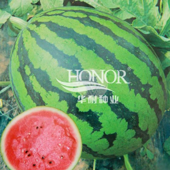 青州华耐甜王一号西瓜种子