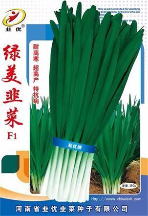 2018扶沟韭菜种子 品种绿美F1杂交一代