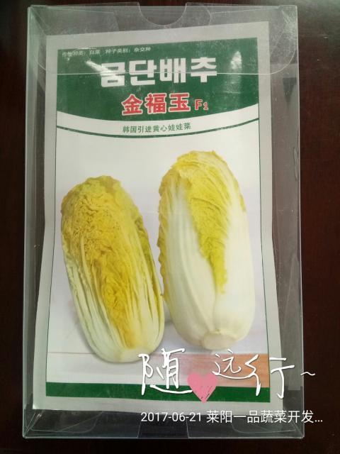 迷你秀-金福玉娃娃菜种子