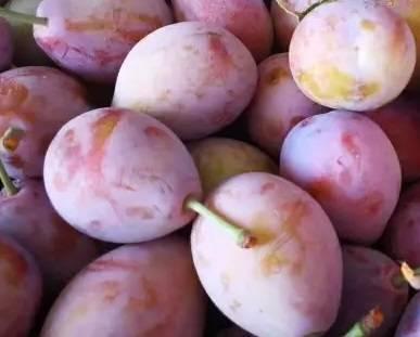 供应西梅新品种苗木