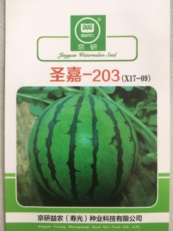 山东寿光8424西瓜种子