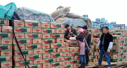 西瓜和香瓜已成为缅甸主要出口创汇水果