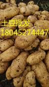 黑龙江省讷河市脱毒马铃薯的主产区