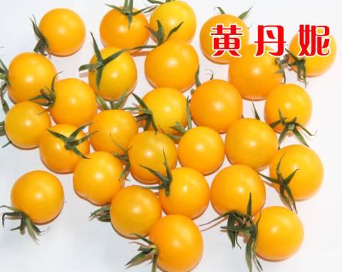 黄色樱桃番茄种子口感好樱桃番茄种子—黄丹妮