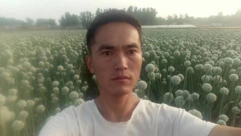 聊城二红洋葱种子 培育人-刘立功