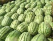 本人职业瓜农,在新疆昌吉州种植西瓜十几年