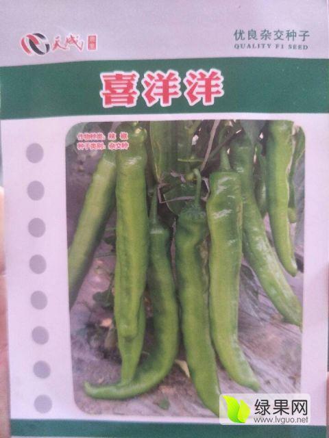 黄皮尖椒丨黄皮长椒丨喜洋洋种子批发
