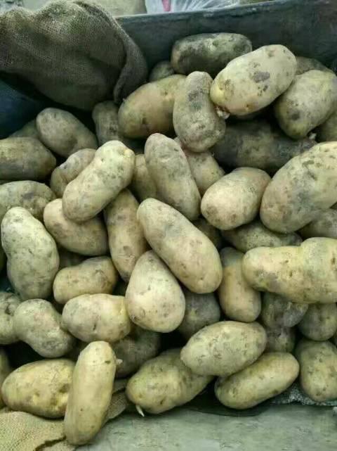 黑龙江土豆(荷兰)(尤金885)(延暑四号)(兴佳)等等。