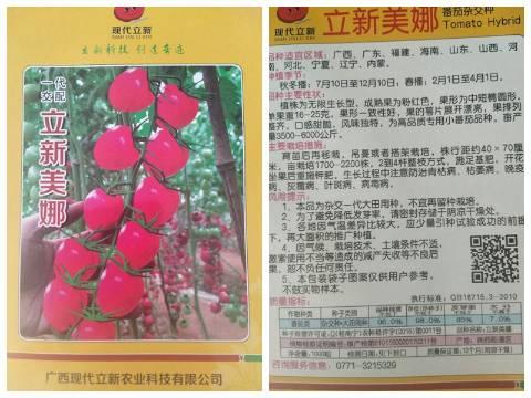 立新美娜番茄种子