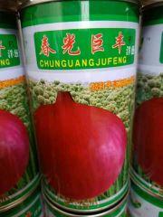洋葱苗预售,二红半高,木产15000