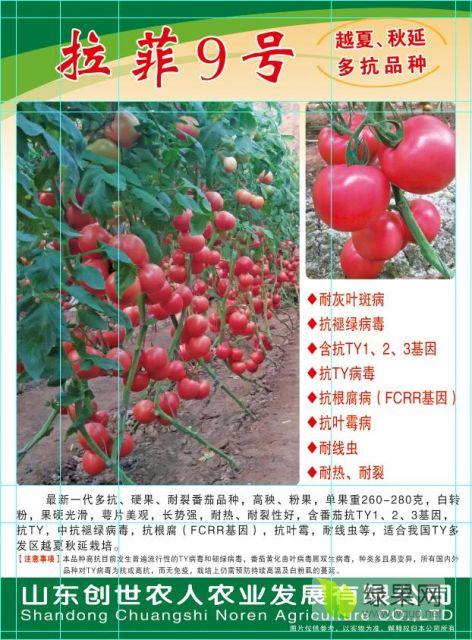 寿光拉菲9号番茄种子