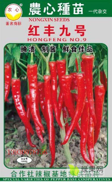 红丰九号高产小尖椒制种辣椒种子