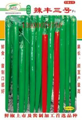 高产线椒改良型辣丰三号辣椒种子