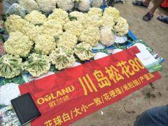 天门市精品白花菜花每天海量供货