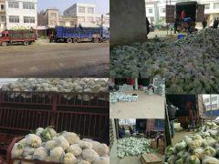 天门张港镇鑫诚蔬菜产销合作社精品菜花海量供货