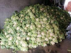 天门张港镇 精品白花菜花每天海量供货