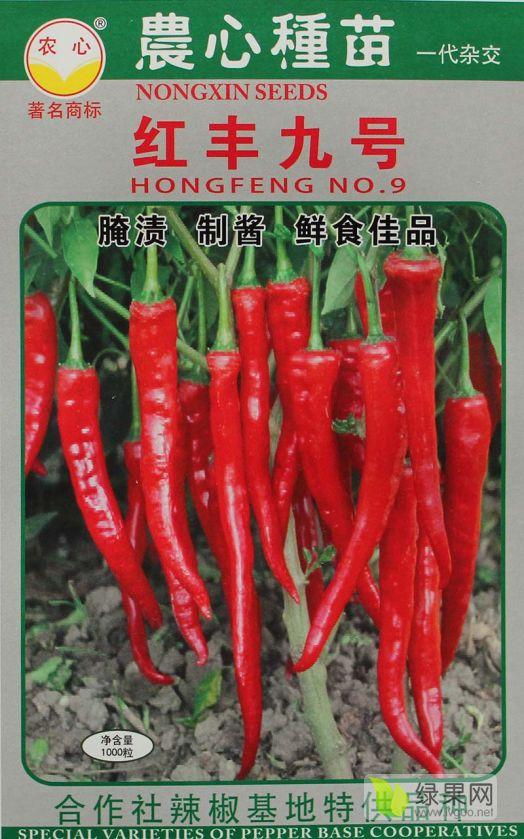 红丰九号辣椒种子