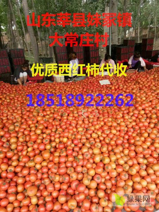 mmexport1547108236419.jpg