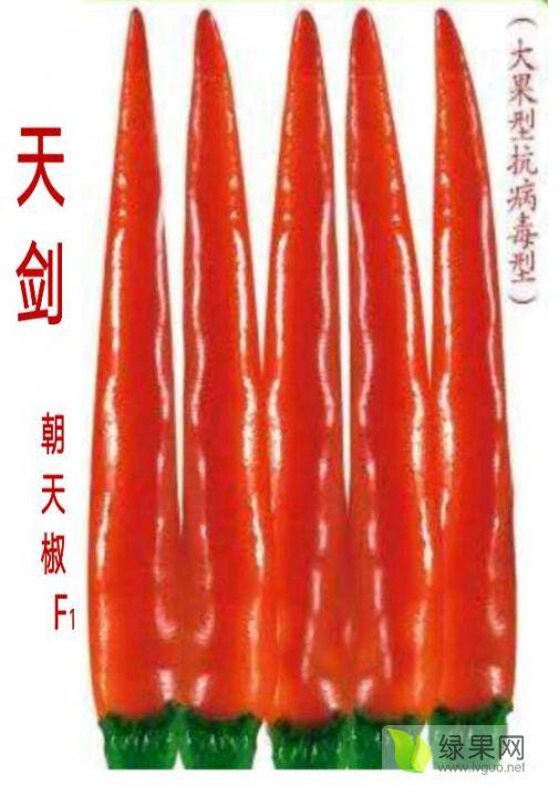 供应艳红辣椒朝天椒金艳/靓艳/天剑/艳美/黑金条
