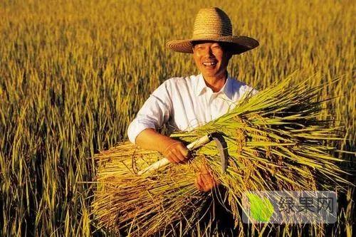 中国农业最大的问题:所有人都在指手画脚!