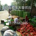寒亭区红玉西瓜大量上市,需要的可以联系我。