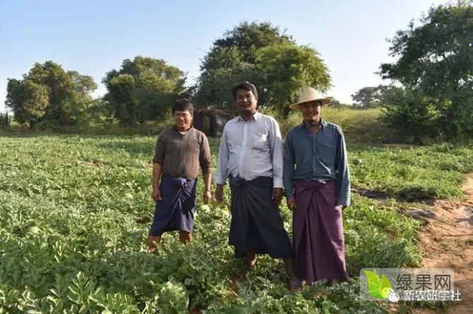 反季节西瓜市场的缅甸瓜是怎样炼成的