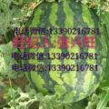 辽宁锦州凌海市甜王西瓜代办代发13390216781微同